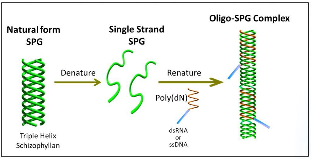 オリゴ複合体の開発